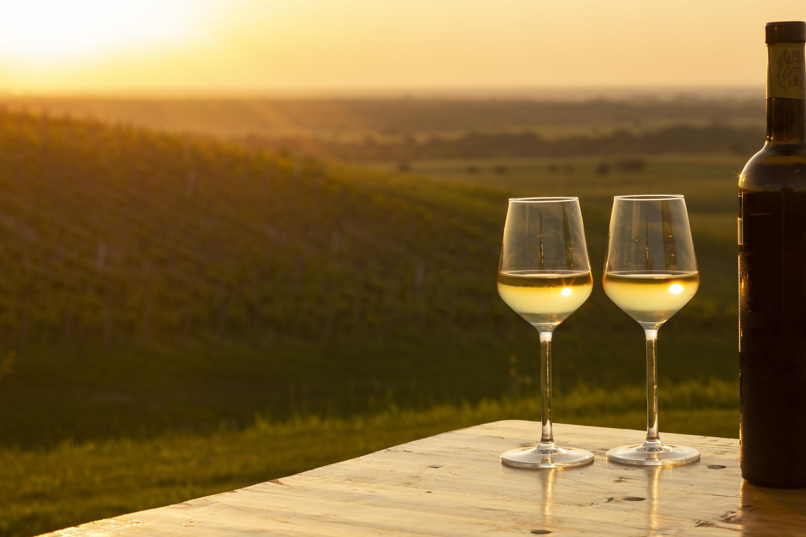 Istria Wine