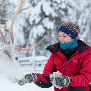 Harriniva Hotels & Safaris Reindeer 19